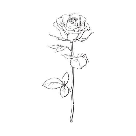 深い輪郭はバラ花、緑の葉、白い背景で隔離のスケッチ スタイル ベクトル図です。リアルな手描きのオープン ローズ、愛、装飾要素のシンボルの