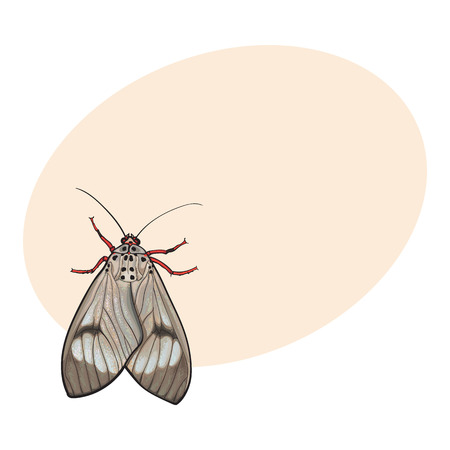Top view of gray moth, sketch illustration isolated on background with place for text. color Realistic hand drawing of moth butterfly insect on white background Illustration