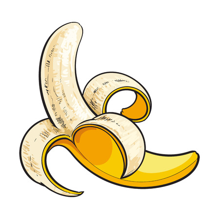 One open, peeled ripe banana, sketch style vector illustration isolated on white background. Realistic hand drawing of banana open, peeled in traditional way Illustration