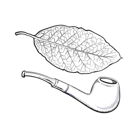 varnished: Luxurious wooden varnished smoking pipe and dry tobacco leaf, sketch vector illustration isolated on white background. Realistic hand-drawing of retro wooden smoking pipe and tobacco leaf