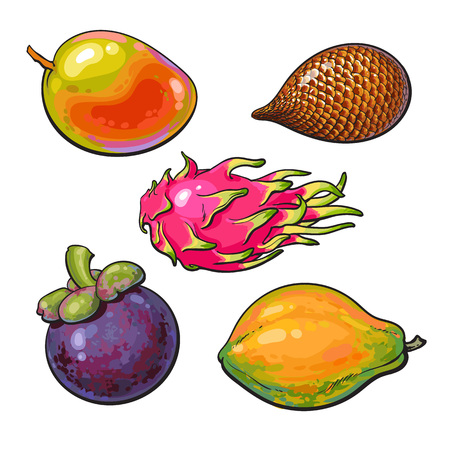Whole mango, papaya, mangosteen, salak, pitaya tropical fruit, sketch vector illustration isolated on white background. Realistic hand drawing of mango, papaya, mangosteen, snake fruit, dragon fruit Illustration