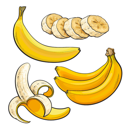 Sliced, peeled, singl and bunch of three ripe banana, sketch style vector illustration isolated on white background. Realistic hand drawing of whole, peeled, sliced banana and a bunch of three bananas