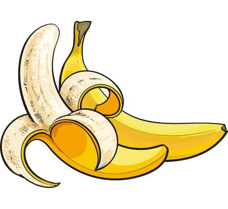 plátanos, uno abierto y sin abrir, boceto ilustración vectorial de estilo aislado sobre fondo blanco. Dibujo a mano realista de plátanos maduros abiertos y sin abrir Vectores