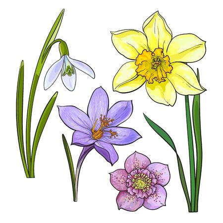夏の花、スイセン、スノー ドロップ、クロッカス、スケッチ ベクトル イラスト白い背景で隔離のセットです。リアルな手描きの茎と葉、スイセン