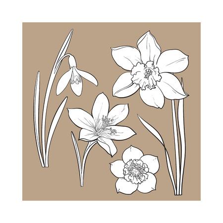 Set van zomerbloemen, narcis, sneeuwklokje, krokus, schets vector illustratie geïsoleerd op bruine achtergrond. Realistische hand tekenen van de lente bloemen met stengels en bladeren, narcis, sneeuwklokje, krokus