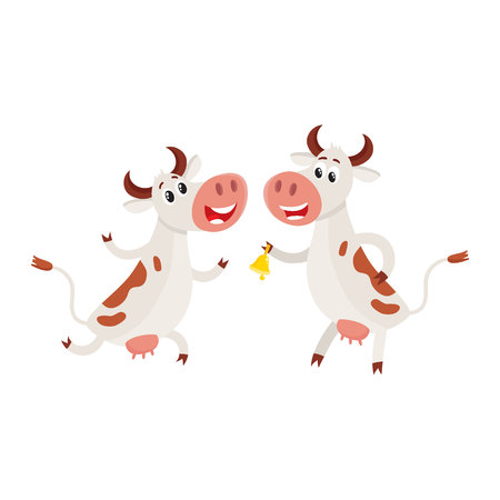 Two spotted Dutch cows, one ringing a bell, another dancing, running, cartoon vector illustration isolated on white background. Funny cow characters for dairy farm product design