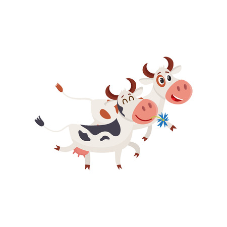 boca cerrada: Dos vacas manchadas caminando juntos románticamente, ilustración vectorial de dibujos animados aislado en el fondo blanco. Vaca divertida celebración de margarita en la boca y caminando junto a un toro, el concepto de la granja lechera Vectores