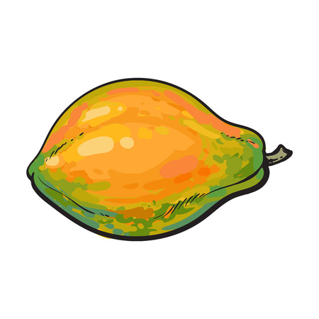 horizontal position: Whole unpeeled, uncut papaya tropical fruit in horizontal position, sketch style vector illustration isolated on white background. Realistic hand drawing of whole papaya fruit Illustration