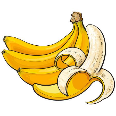 plátanos, uno abierto, otro sin abrir y sin pelar, dibujo ilustración vectorial de estilo aislado sobre fondo blanco. Dibujo a mano realista de plátanos maduros abiertos y sin abrir Vectores