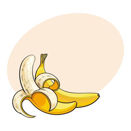 Dos plátanos maduros, uno abierto, otro sin abrir y unpeeled, ilustración del vector del estilo del bosquejo aislado con el lugar para el texto. . Dibujo realista de plátanos maduros abiertos y sin abrir Vectores