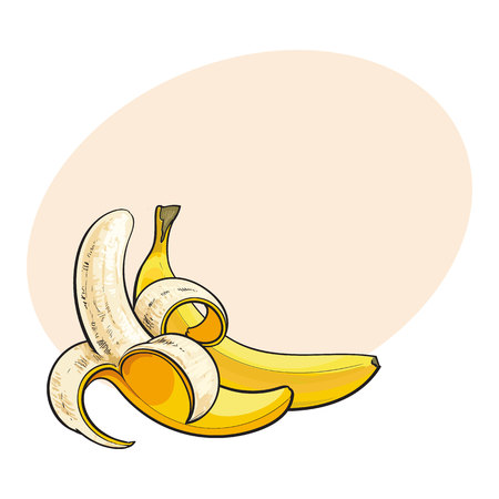 Two ripe bananas, one open, another unopened and unpeeled, sketch style vector illustration isolated with place for text. . Realistic hand drawing of open and unopened ripe bananas
