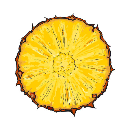 pineapple slice: Unpeeled round pineapple slice, top view, sketch style vector illustration isolated . Realistic hand drawing of fresh, ripe pineapple slice, half pineapple