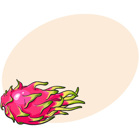 Whole unpeeled, uncut dragon fruit in horizontal position, sketch style vector illustration with place for text. Realistic hand drawing of whole dragon fruit Illustration