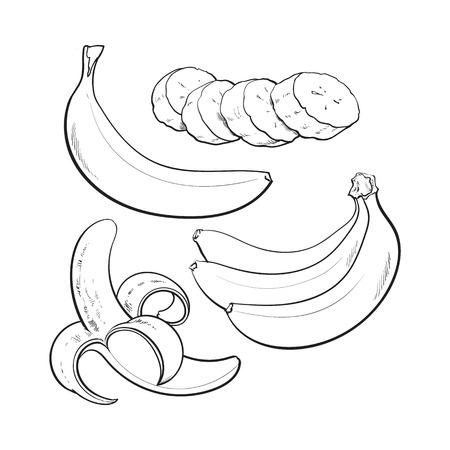 zwart en wit Gesneden, gepeld, singl en bos van drie rijpe bananen, schets stijl vectorillustratie geïsoleerd. Realistische handtekening van hele, gepelde, gesneden banaan en een bos van drie bananen