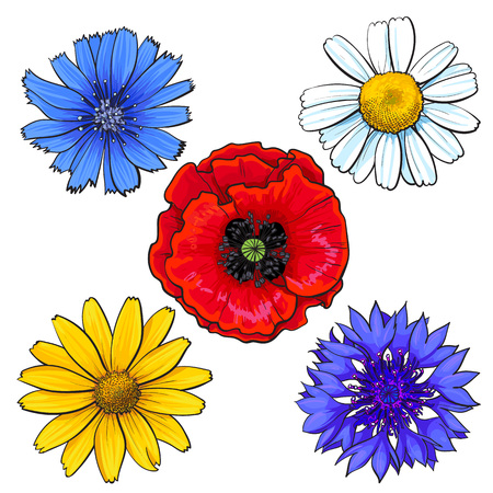 heather: Set of wild, field flowers - poppy, chamomile, cornflower, daisy, sketch vector illustration isolated on white background. Realistic hand drawing of wild, field flowers, top view, decoration elements