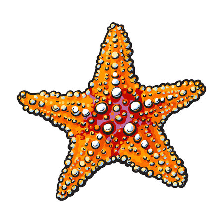 Hand drawn starfish, underwater living organism, sketch style vector illustration isolated on white background.