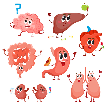 bowels: Set of cute and funny healthy human organ characters - heart, lungs, kidneys, intestines, liver, stomach, brain, cartoon illustration isolated on white background. Human organ characters
