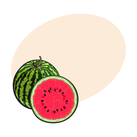 Whole striped watermelon with curled up tail and cut in half, sketch style illustration isolated with place for text. Realistic hand drawing of whole and half of juicy, ripe watermelon
