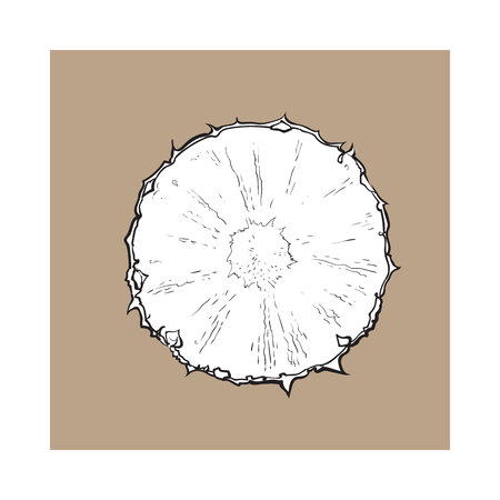 Unpeeled round pineapple slice, top view, sketch style vector illustration isolated on brown background. Realistic hand drawing of fresh, ripe pineapple slice, half pineapple Illustration