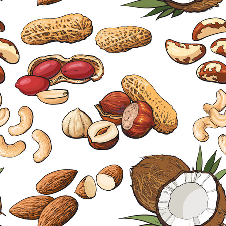 Seamless pattern of coconut, cashew, peanut, hazelnut, almond, Brazil nuts on white background, sketch style vector illustration. Mixed nuts seamless pattern, background, backdrop design