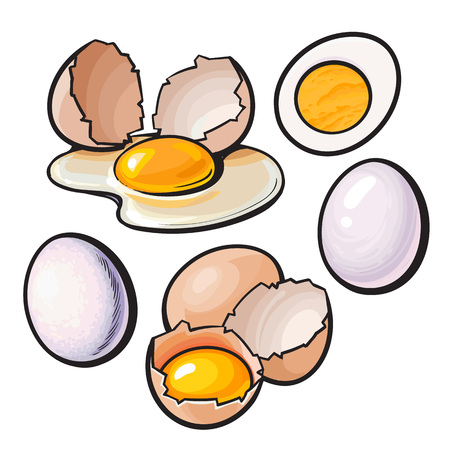 Whole and cracked, broken shell chicken egg composition, sketch style vector illustration isolated on white background. Hand drawn raw, boiled and fried, whole and cracked chicken eggs Illustration