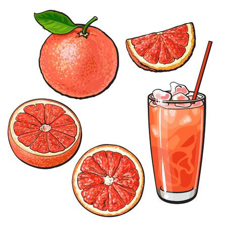 全体の設定、半分、四分の一のグレープ フルーツと氷、新鮮なジュースのグラスは白い背景のスタイル ベクトル図をスケッチします。手全体に描画
