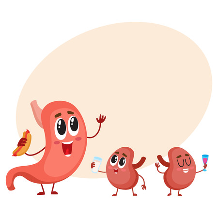 Cute and funny, smiling human stomach and kidney characters, digestive organs, cartoon vector illustration with place for text. Healthy human stomach and kidney characters, digestive system