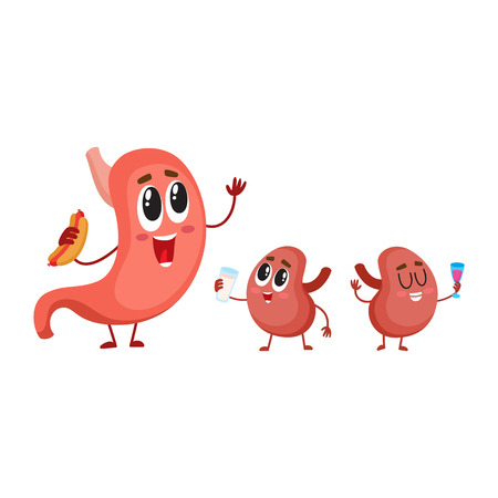 digestive system: Cute and funny, smiling human stomach and kidney characters, digestive organs, cartoon vector illustration isolated on white background. Healthy human stomach and kidney characters, digestive system Illustration