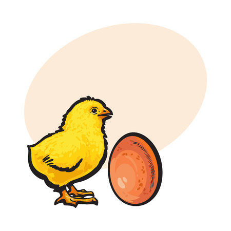 Little newborn chicken and whole brown egg, sketch style vector illustration with place for text Hand drawn, sketched illustration of little yellow chick and chicken egg Illustration