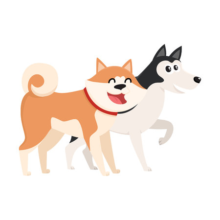 Couple of cute, funny dog characters - brown Japanese akita inu, black and white husky, cartoon vector illustration isolated on white background. Lovely husky and akita inu characters, dog breeds Illustration