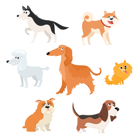 Cute dog characters of various breeds - poodle, husky, spitz, basset, bulldog, afghan hound, akita inu, cartoon vector illustration isolated on white background. Set of dog breed, characters