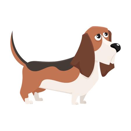 Caractère mignon chien de race basset hound, illustration de vecteur de dessin animé isolé sur fond blanc. Caractère gentil et sympathique de chien basset hound, illustration de dessin animé coloré Banque d'images - 75338407