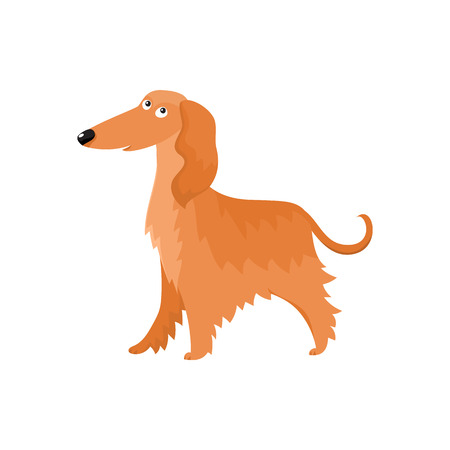 Cute long haired Afghan hound dog character, cartoon vector illustration isolated on white background. Nice and friendly dog character, Afghan hound breed, colorful cartoon illustration Illustration
