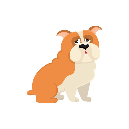 Cute English bulldog dog character, cartoon vector illustration isolated on white background. Funny sitting English bulldog dog character, colorful cartoon illustration