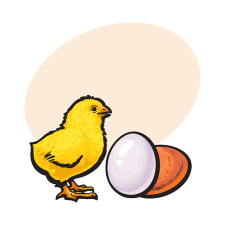 Little newborn chicken and whole brown egg, sketch style vector illustrationwith space for text Hand drawn, sketched illustration of little yellow chick and chicken egg