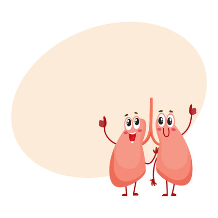 Pair of cute and funny, smiling human lung characters, cartoon vector illustration with space for text. Healthy human lung characters, respiratory system health care element Illustration
