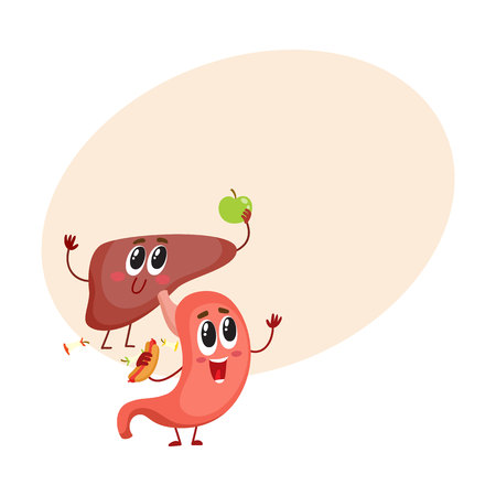 Cute and funny, smiling human stomach and liver characters, digestive organs, cartoon vector illustration with space for text. Healthy human stomach and liver characters, health care concept