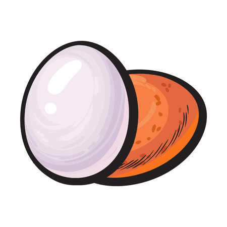 Ganze hart gekocht, geschält und ungeschält Hühnerei, Skizze Stil Vektor-Illustration isoliert auf weißem Hintergrund. Hand gezeichnet, skizzierte einzelne geschältes gekochtes und ungeschältes rohes Hühnerei Standard-Bild - 75845939
