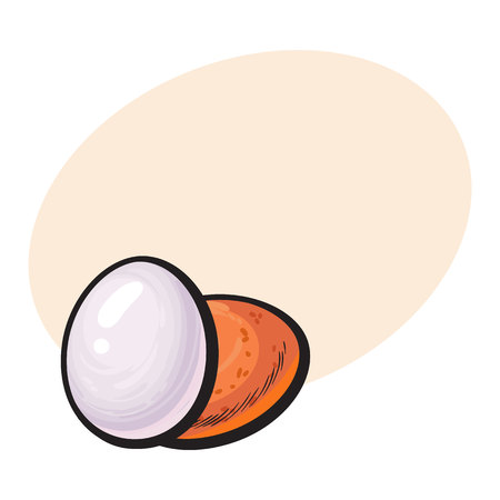 Whole hard boiled, peeled and unpeeled chicken egg, sketch style vector illustration with space for textHand drawn, sketched single peeled boiled and unpeeled raw chicken egg