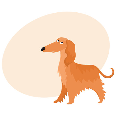 Cute long haired Afghan hound dog character, cartoon vector illustration with space.