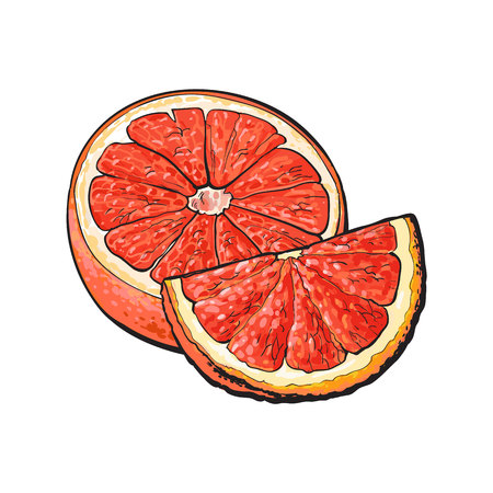 Half and quarter of ripe pink grapefruit, red orange, hand drawn sketch style vector illustration on white background. Hand drawing of unpeeled grapefruit cut in half and piece Ilustracja