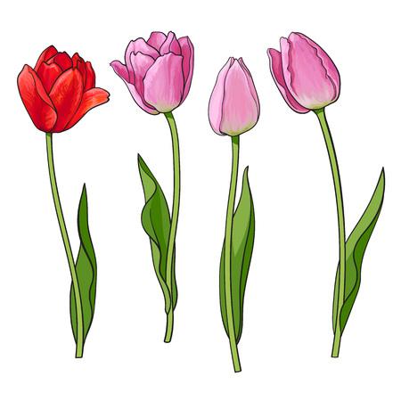 Dibujado a mano conjunto de vista lateral rojo, rosa abierto y cerrado flor de tulipán, ilustración vectorial de estilo de boceto aisladas sobre fondo blanco. Dibujo realista de la mano de flores del tulipán, elemento de la decoración