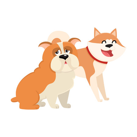 cute dog: Couple of cute, funny dog characters - Japanese akita inu and English bulldog, cartoon vector illustration isolated on white background. Lovely bulldog and akita inu characters, dog breeds