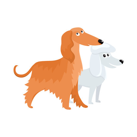 Couple of cute, funny dog characters - long haired Afghan hound and white poodle, cartoon vector illustration isolated on white background. Lovely bulldog and long haired Afghan hound characters, dog breeds