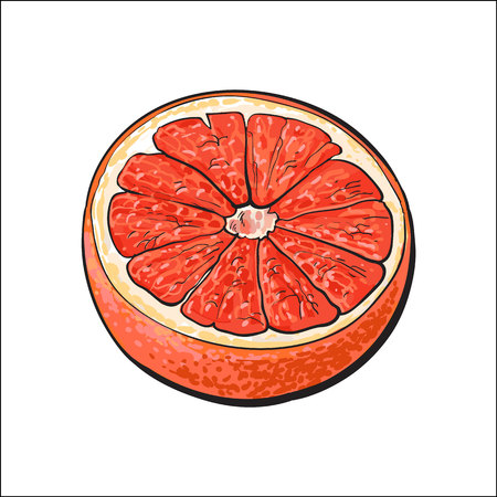 Half of ripe pink grapefruit, red orange, hand drawn sketch style vector illustration on white background. Hand drawing of unpeeled grapefruit cut in half