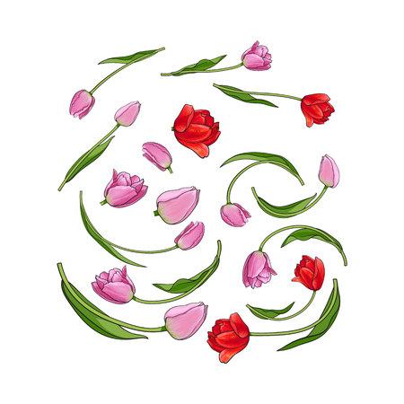 Hand getrokken reeks elementen van de tulpenbloem, knop, bloesems, schetsstijl vectordieillustratie op witte achtergrond wordt geïsoleerd. Realistische handtekening van tulpenbloemen, bloesems, bloemblaadjes, decoratieelement Stock Illustratie