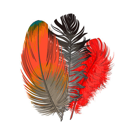 Hand drawn bunch of three colorful tropical, exotic bird feathers, sketch style vector illustration on white background. Realistic hand drawing of colorful bird feather Illustration
