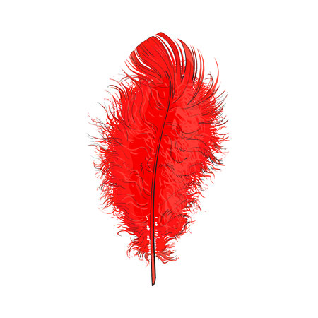 feather boa: Hand drawn tender, fluffy red bird feather, sketch style vector illustration on white background. Realistic hand drawing of scarlet, red tender feather