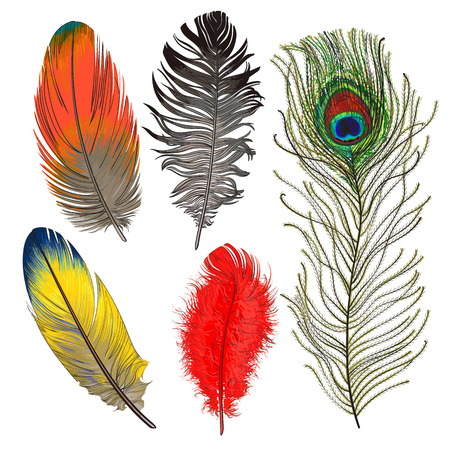 Hand drawn set of various colorful bird feathers, sketch style vector illustration on white background. Realistic hand drawing of peacock, parrot, dove, falcon bird feather