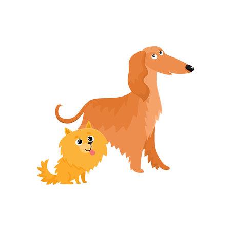 いくつかのかわいい、面白い犬文字 - アフガン ・ ハウンドとポメラニアン スピッツは、白い背景で隔離のベクトル図を漫画します。素敵なアフガ